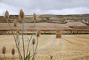 Rural Scene Royalty Free Stock Photo - Image: 16206505
