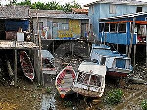 Amazonian Scene Stock Photography - Image: 16208762