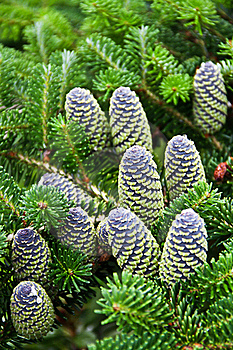 Cones Stock Images - Image: 16216704