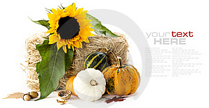 Pumpkins And Sunflower Stock Photo - Image: 16224740