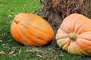 Peculiar Pumpkins Royalty Free Stock Photo - Image: 16224875