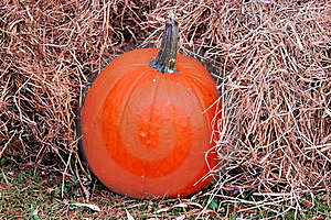 Fall Harvest Royalty Free Stock Photo - Image: 16224885