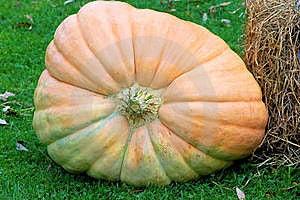 Big Pumpkin Royalty Free Stock Photography - Image: 16224887