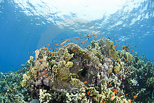 Colorful Tropical Coral Scene In Shallow Water. Stock Photo - Image: 16229250
