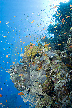 A Colorful And Vibrant Tropical Reef Scene. Royalty Free Stock Images - Image: 16229629