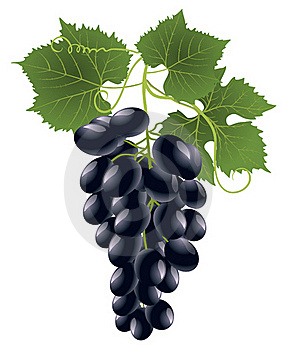 Grape Royalty Free Stock Photography - Image: 16230467