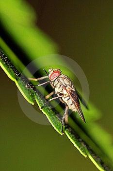 Fliegenfleischfresser Stockfotos - Bild: 16237563