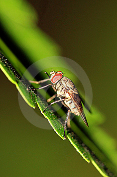 Klipsk Rovdjur Arkivfoton - Bild: 16237563