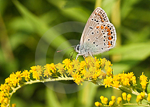 Butterfly Royalty Free Stock Photo - Image: 16244095
