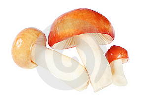 Three Mushrooms. Russula Stock Photo - Image: 16247040