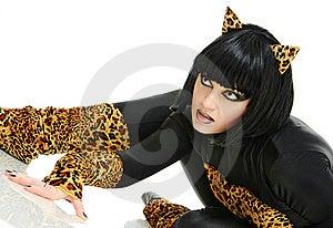 Like A Cat Stock Image - Image: 16250211