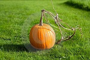 Vibrant Pumpkin Stock Images - Image: 16256414