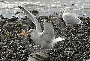 Birds On The Shore Stock Photography - Image: 16256752
