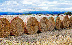 Straw Bales Royalty Free Stock Photography - Image: 16263707