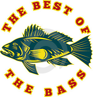 Sea Bass Fish Best Stock Image - Image: 16270581
