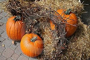 Pumpkins Stock Photo - Image: 16273300