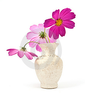 Daisy In A Vase Stock Image - Image: 16274351