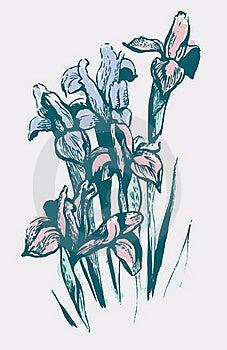 Iris Flowers Stock Photos - Image: 16282713
