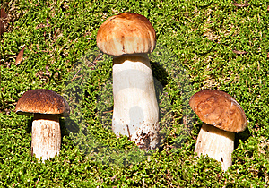 Mushrooms In Moss Royalty Free Stock Images - Image: 16283409