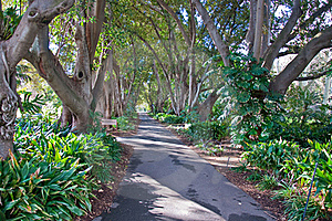 Botanic Garden Royalty Free Stock Image - Image: 16285136