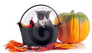 Holloween Kitten Stock Image - Image: 16287801