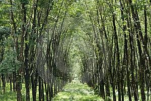 Tunnel Tree Stock Image - Image: 16288441