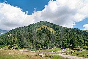 In Lake Ritsa Vicinities. Abkhazia. Stock Images - Image: 16289324