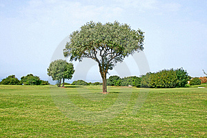 Tree In Field Stock Photography - Image: 16289462