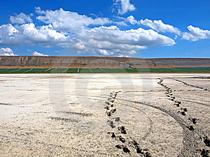 Footprints On The Salt Lake. Koktebel. Ukraine Stock Photo - Image: 16289550