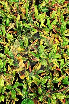 Ornamental Green Royalty Free Stock Image - Image: 16290056