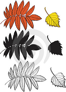 A Set Of Birch And Rowan Leaves Royalty Free Stock Photography - Image: 16292047