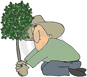 Man Planting A Tree Stock Image - Image: 16292821