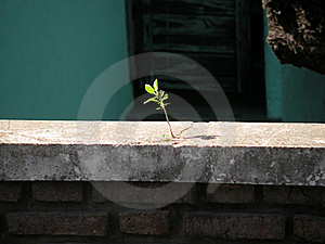 Triumph Of Nature Royalty Free Stock Photo - Image: 16293595