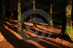 Into The Woods Royalty Free Stock Photography - Image: 1630327