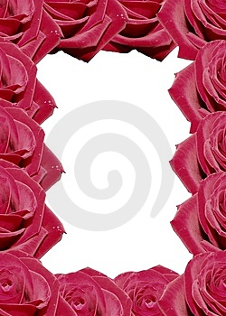 Rose Stock Photos