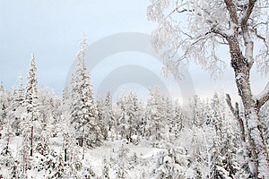 A Quiet Winter Frozen Forest Stock Photography - Image: 1633652