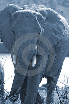 Full Moon Elephant. Royalty Free Stock Image - Image: 1633836