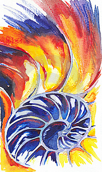 Nautilus Shell. Watercolors Drawing Stock Photography - Image: 16302862