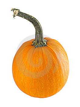 Pumpkin Royalty Free Stock Image - Image: 16304276