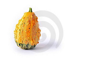 Coarse Gourd Stock Photography - Image: 16305512
