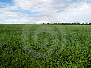 Beutiful Green Field Background Stock Images - Image: 16313084