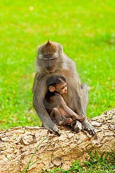 L'amour Et L'étreinte De La Nature Photographie stock libre de droits - Image: 16314707