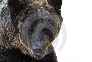 Bear Stock Photography - Image: 16315612