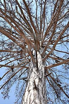 Elf's Tree Royalty Free Stock Image - Image: 16321976