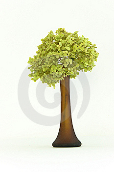 Delicate Dried Green Hortensia (hydrangea) Flowers Royalty Free Stock Image - Image: 16326036