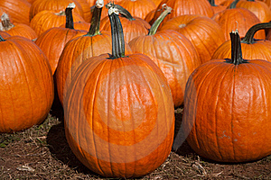 Pumpkins Stock Photography - Image: 16326282
