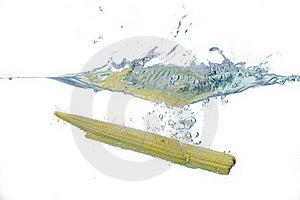 Fresh Babycorn Splash Royalty Free Stock Photo - Image: 16335045