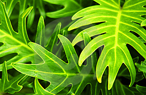 Tropical Plant Stock Images - Image: 16339224