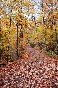 Fall Color Road With Full Of Leaves Covering Stock Image - Image: 16339781
