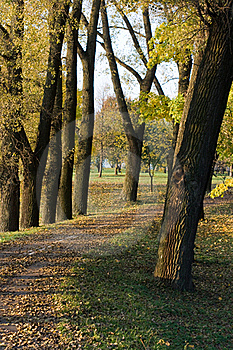 Autumn Park Royalty Free Stock Photo - Image: 16350595